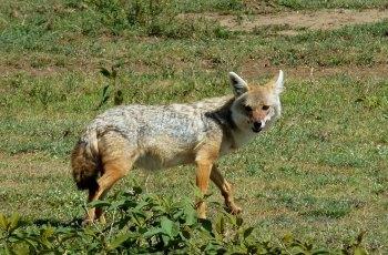 「賽倫蓋提國家公園Serengeti N.P.」的圖片搜尋結果